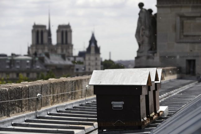 It's a miracle: Beehives of Notre-Dame survive inferno