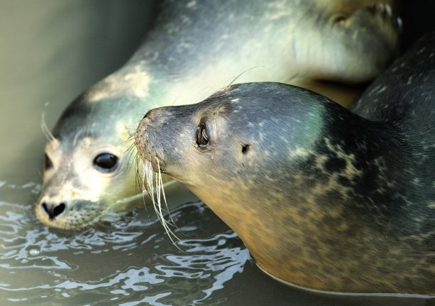 Seals found shot and decapitated on beaches in northern France