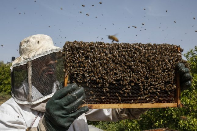 How one French apple farmer became a beekeeper to keep his business alive