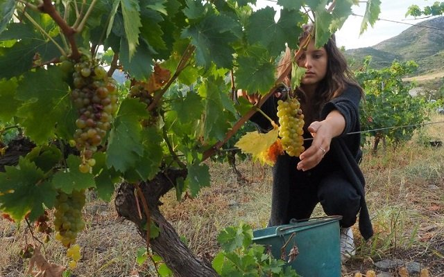 How France is fighting to save its struggling wine industry