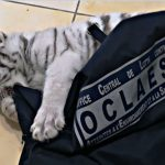 White tiger seized at house in southeast France