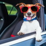 What you need to know about travelling between the UK and France with your dog