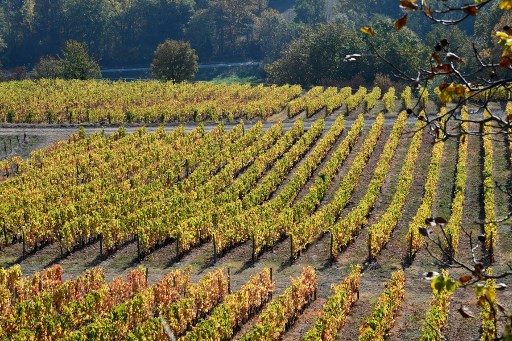 OPINION: Why the French wine industry could be seriously bad for our health