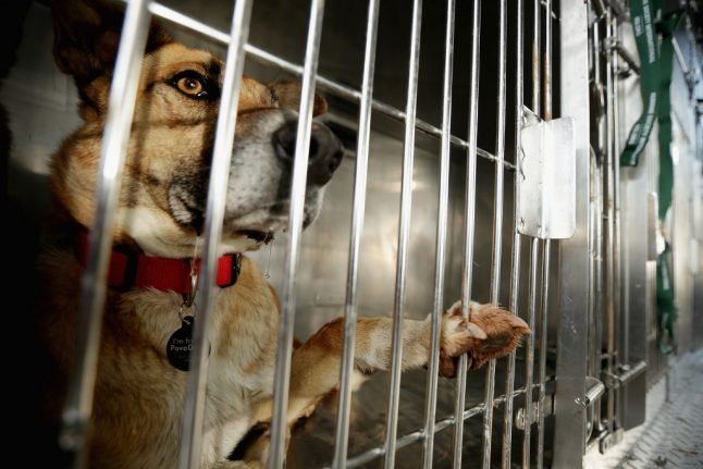 French police warn of jail terms for people who abandon their pets
