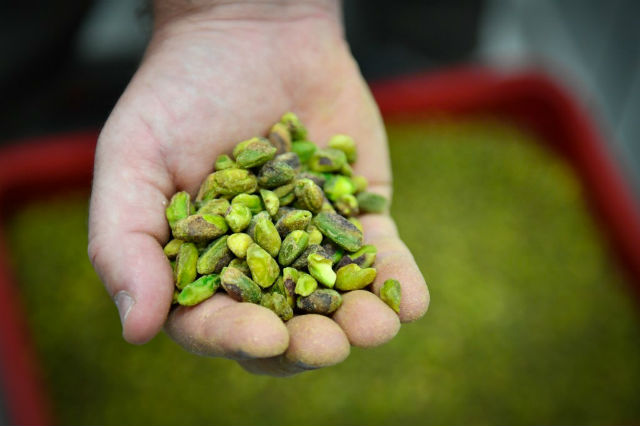 'It's a gamble but we're not crazy': French growers turn to pistachios