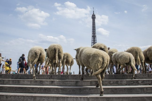 Flock to Paris: Sheep see the sites on tasting tour of French capital