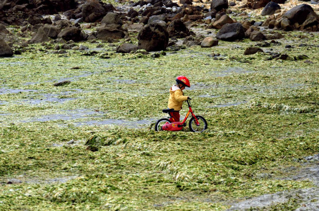 Fears in France over dangers of toxic green algae after man dies