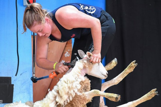 World sheep-shearing championship held on French soil for first time