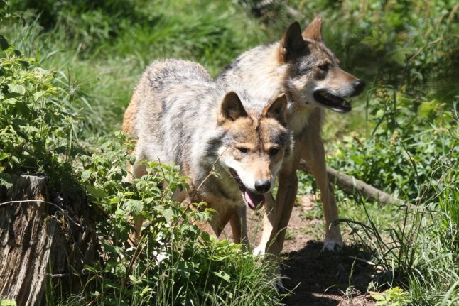 MAP: Where in France will you find wolves?