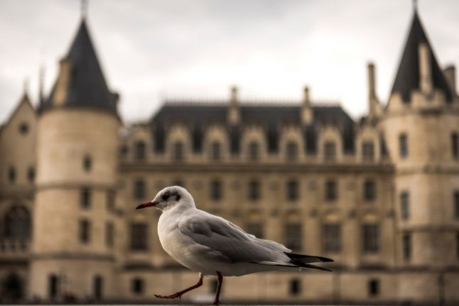 Why seagulls are leaving the French coast and setting up home in Paris