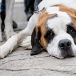 Travel between France and UK: Pet owners warned about four-month waiting period