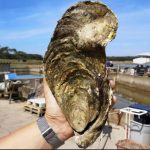 How Georgette the giant French oyster escaped the dinner table