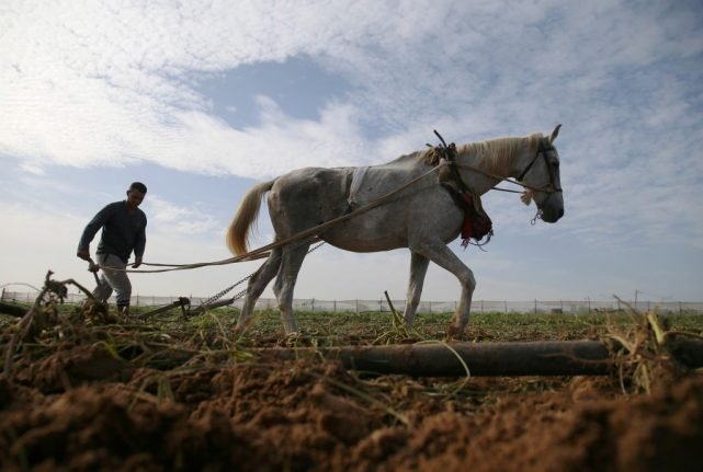 Sésame the French horse is on trial… for producing too much manure