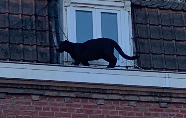 Photo of the Day: The mystery of the black panther in northern France