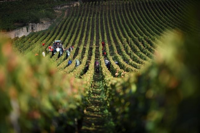 French wine police are on the hunt for Burgundy grape thieves