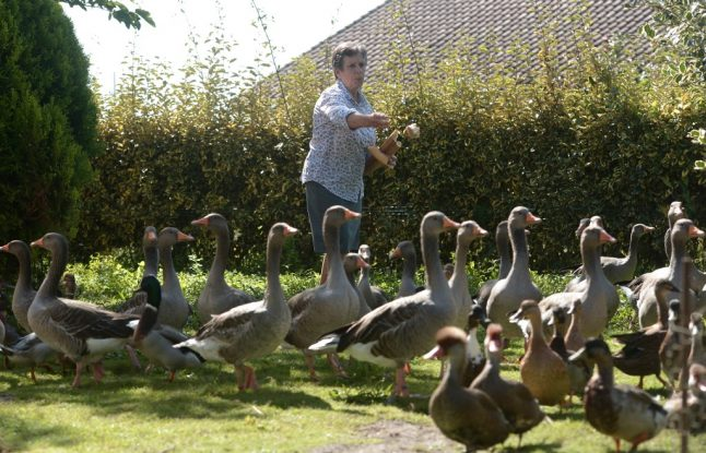 Quacking ducks v neighbours in latest noise row from rural France