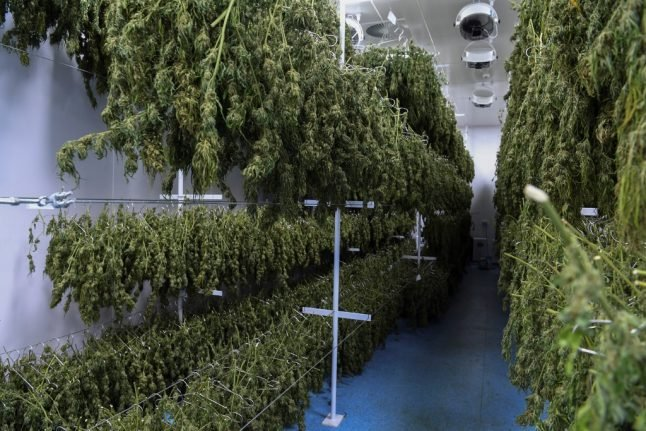 France to begin two years of tests into medical cannabis use