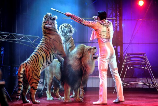 Paris moves to ban wild animals from circuses