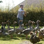 Noisy ducks in south west France can keep on quacking, court rules