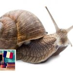 France facts: Snails need a ticket to travel on a train