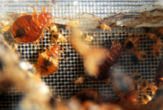 France launches emergency bedbug helpline after insect influx