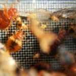Paris sets up emergency hotline to fight bed bugs
