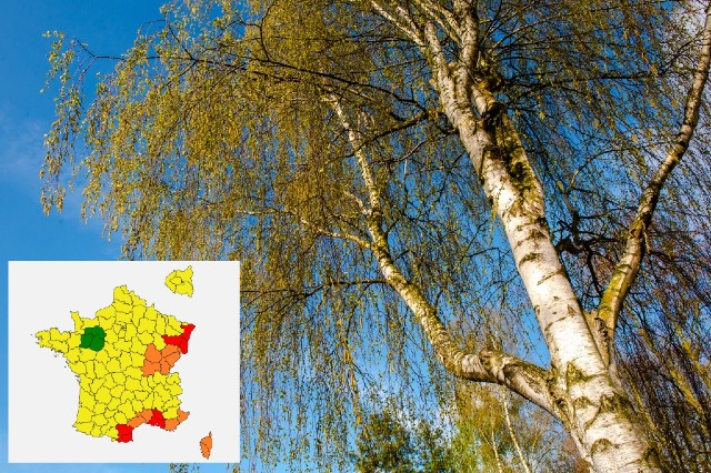 Warm winter sparks early pollen alerts in France