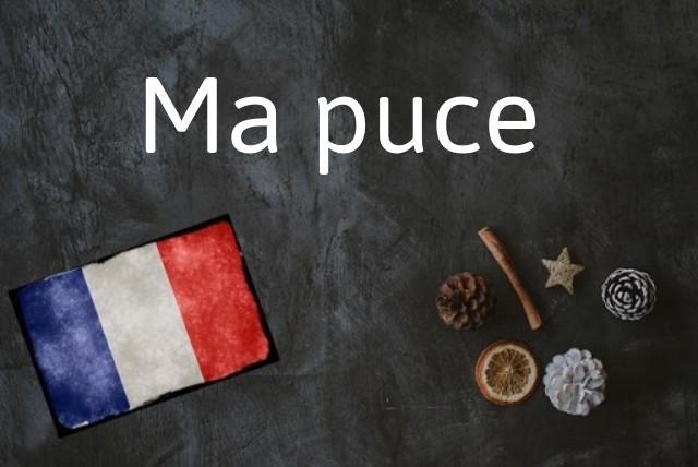 French word of the Day: Ma puce