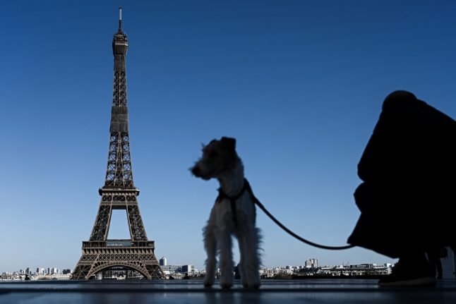 15 everyday French expressions inspired by animals