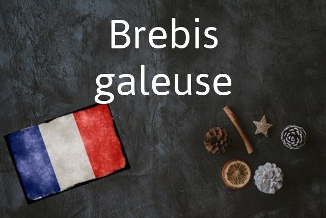 French phrase of the Day: Brebis galeuse