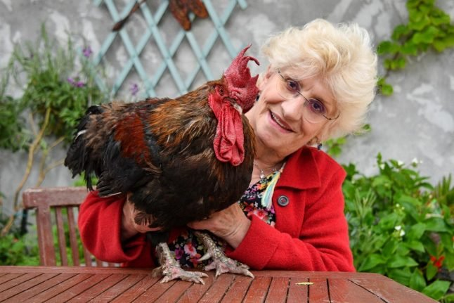 Maurice the French cockerel at the centre of rural court battle has died