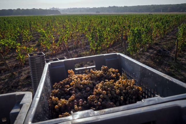French vineyards begin early grape harvest, with extra health measures