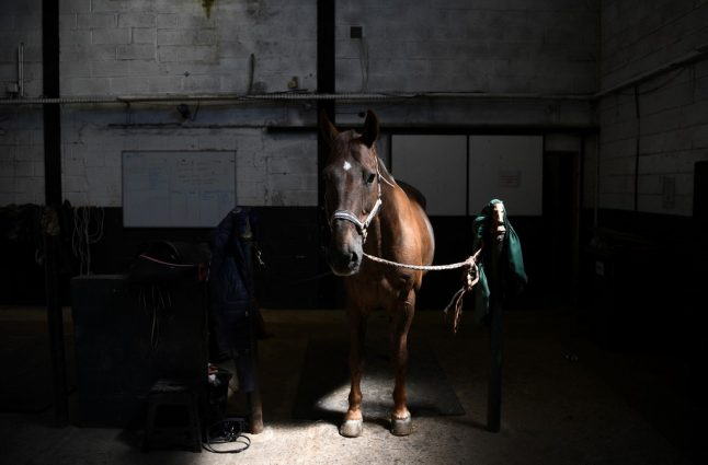 French police urge vigilance as horse mutilations mount