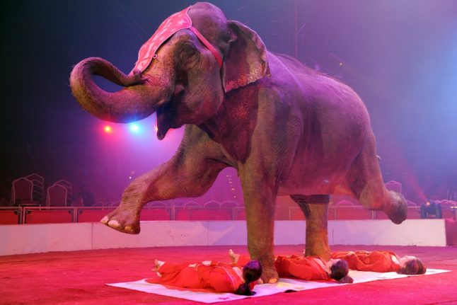 France to ban wild animals in travelling circuses