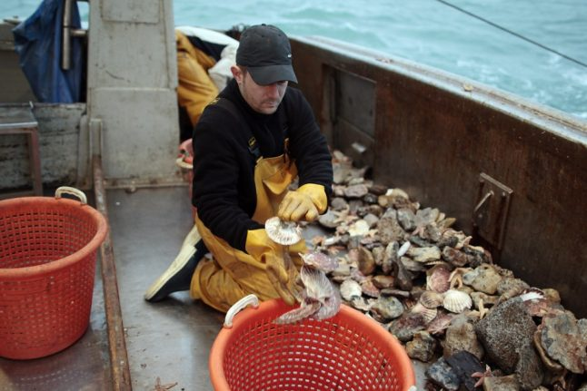 Why this Christmas will be a good one for scallop-lovers in France
