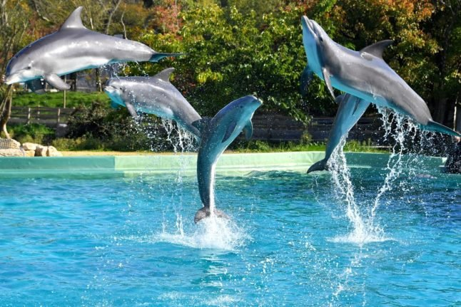 France's Asterix park to shut down dolphin show