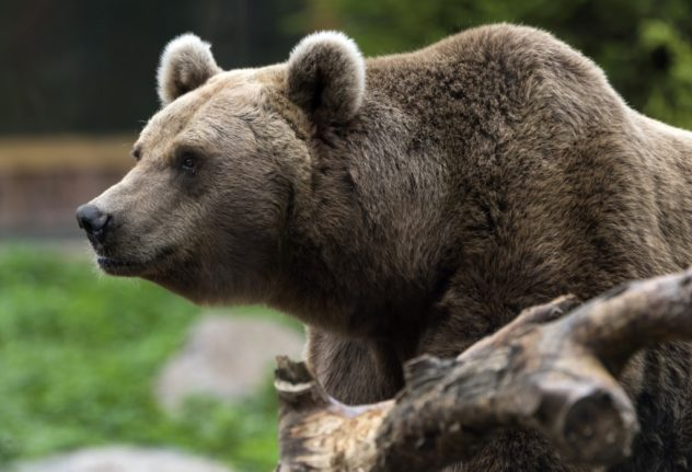 No more shooting to scare Pyrenees bears, French court rules