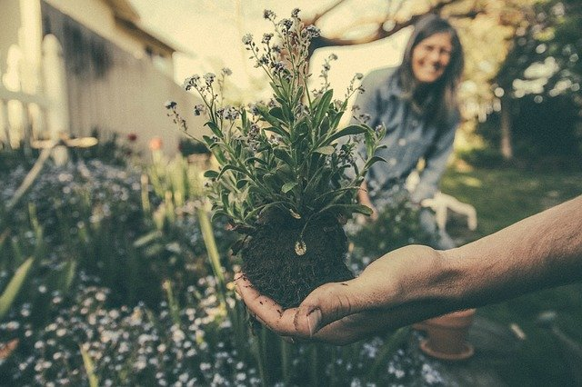 Flowers, seedlings and bulbs – what are the rules on bringing plants from the UK to France?