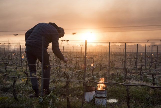 Cold snap 'could slash French wine harvest by 30 percent'