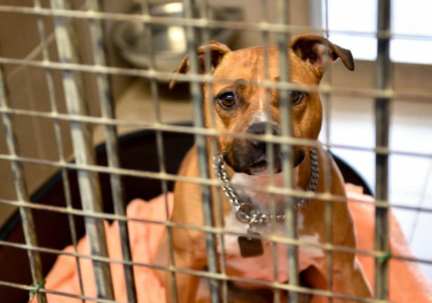 France launches new plan to tackle abandonment of pets
