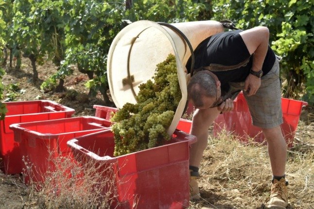 French wine production set for 'historic low' after disastrous frosts and wet summer