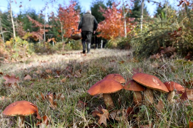 What you need to know for safe and enjoyable mushroom picking in France