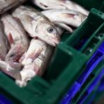EXPLAINED: Why are France and the UK fighting about fish?